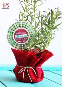 rosemary herb holiday gift 2