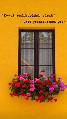 Windows, Plants, Window, Flora, Plant, Ramen