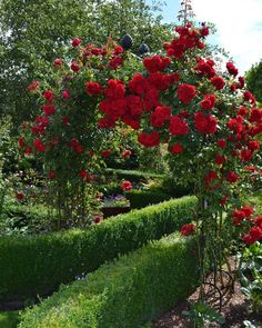 Victorian Rose Arch 'Kiftsgate' by Classic Garden Elements with Kordes climbing roses 'Amadeus' (on the right) and 'Florentina' (on the left) in Garden of Roses, Spenge / Germany.