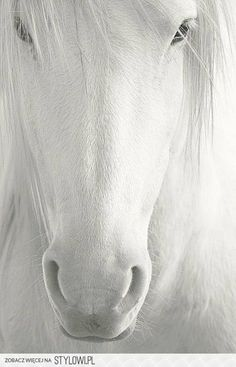 White horse = pretty! Reminds you of those stories of a Prince Charming charging in on his white horse... :)