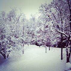 #instagram #winter #nature #snow #trees