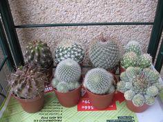 cactus)