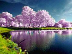 High Resolution Spring Desktop Wallpaper | -spring-wallpapers-hd-images-wallpaper-high-resolution-spring-desktop ...