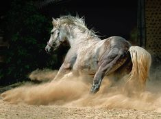 Horses are my Life: Equus - belleza cuadrúpeda | beauty quadrupedal. El caballo Andaluz | The Andalusian Horse