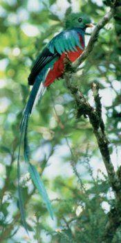 Costa Rica - exotic birds
