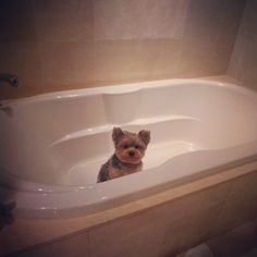I think after #TSMagic, a nice long bath is in order. Please pass me the candles. #pebblestheceoFollowing