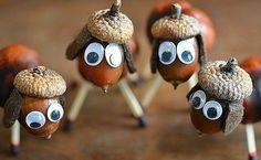 acorn sheep