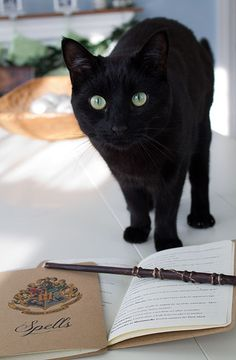 DIY Harry Potter spell book and wand