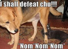 Cat Attacks Dog - Funny Pictures, Photos and Images