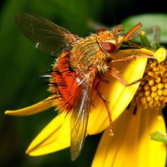 The World's Most Colorful Winged Creatures ~ Adejeania vexatrix