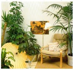 Large Indoor Plants that work best.