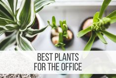 Personalizing your workspace can not only be fun, but beneficial. You will find adding simple items that remind you of home can help you feel calmer, more in control, productive and happy. Especially when adding some plants. Whether they're artificial or real, greenery connects us to nature and can bring a little more joy to … Read more...