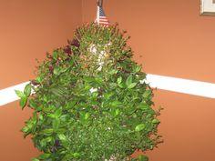 Trish's jungle plant inside now