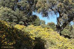 Bosque mediterráneo. Compartir: « anterior · siguiente »