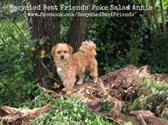 Rescue Dog Terrier Mix Adopt