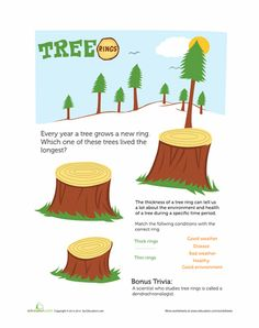This printable will help your child with her observation skills by challenging her to count the tree rings to determine their ages. Numbers Preschool, Fall Preschool, Preschool Science, Preschool Learning, Learning Resources, Preschool Ideas, Fun Learning, Teaching Ideas, Counting Activities