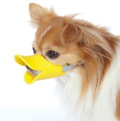 Bem Legaus!: Pets