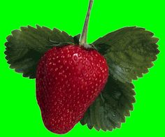 Strawberry - photos for multisyllable word practice - Pinned by @PediaStaff – Please Visit ht.ly/63sNt for all our pediatric therapy pins