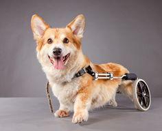 Cosas de perros discapacitados - iBytes