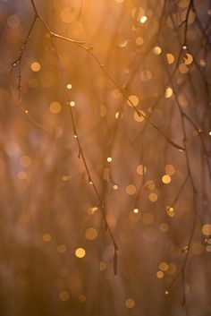 3/365, via Flickr. #Bokeh #Photography by ktowsey