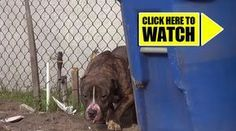 An organization called Hope for Paws received a call about an abandoned pit bull. The poor dog was being tormented by the neighborhood kids who we're throwing rocks at him. I promise you, you'll be in tears only 18 seconds …
