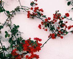 . . White Christmas 5/5 #nataldotiago .
