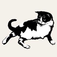 Cool Chill Cat