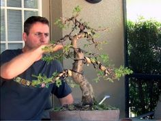 How To Bonsai - Bending large branches with Raffia (good answer for my little juniper!)