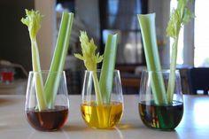 10 expériences scientifiques faciles - Page 5 - Loisirs - Bricolage - Mamanpourlavie.com