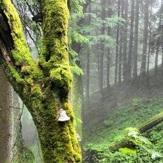 just what the forest looked like on the hike down from the Zugspitz // #hausberg #garmisch #partenkirchen #wald #baum #nebel #fog #forrest #bayern #oberbayern #bavaria #mystisch #ruhe #frieden #beautiful #waldspaziergang #nature #nature_lovers #Padgram