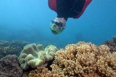 Snorkelling in Queensland Australia