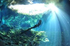Free Diver Ai Futaki