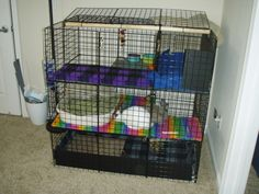 bunny condo looks like ours but with colored floors!!!!  @Caitlin Lawless