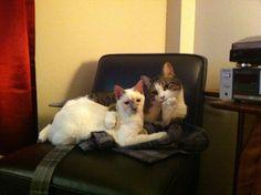 Gatos comiendo Tomates: Foto
