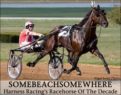 standardbred horses racing - Yahoo! Search Results
