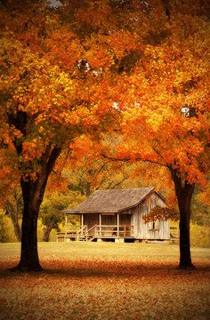 Cabin in the Missouri Ozarks in autumn Fall Pictures, Fall Photos, Beautiful Places, Beautiful Pictures, Beautiful Gorgeous, Autumn Scenes, Jolie Photo, Cabins In The Woods, Autumn Leaves