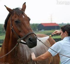 Before you give your horse his next bath, read this.