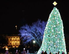 The White House's LED-Illuminated National Christmas Tree is Greener Than Ever in its 90th Year