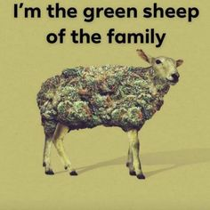 How to grow cannabis Cannabis, Marijuana Art, Medical Marijuana, Weed Jokes, Weed Humor, 420 Memes, Funny Memes, It's Funny, Funny Shit