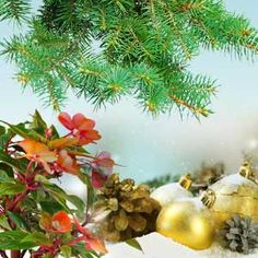 Balsam and Cedar Fragrance Oil from Nature's Garden scents. Our wholesale priced balsam and cedar aroma can be used in candle making and soapmaking. Wholesale Fragrance Oils, Soap Colorants, Soap Supplies, Bath Gel, Peat Moss, Candlemaking, Cold Process Soap, Christmas Inspiration, Soap Making
