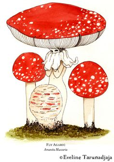 Eveline Tarunadjaja is an illustrator, designer and mushroom enthusiast based in Melbourne, Australia. Illustrator, Mushroom Tattoos, Mushroom Art, Psychedelic Art, Art Sketchbook, Art Inspo, Painting & Drawing, Designer, Character Design