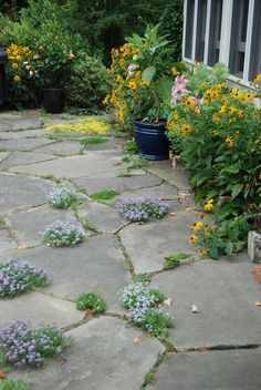Flagstone Patio - Google Search                                                                                                                                                                                 More