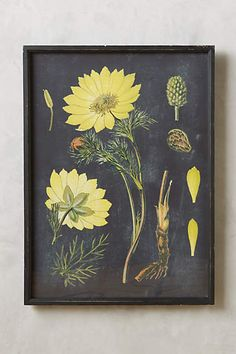 Botanical Specimen Print - anthropologie.com