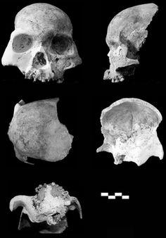Los habitantes de la cueva del ciervo rojo tenían las siguientes características distintivas que difieren de los humanos modernos: cara plana, nariz ancha, que sobresale de la mandíbula sin barbilla, grandes molares, cejas prominentes, cráneo de huesos gruesos, y de tamaño cerebral moderado.