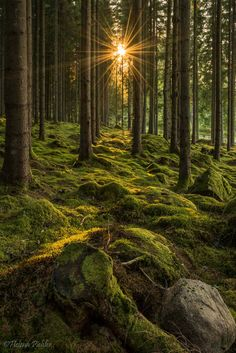 forest-nation: Shine on by Beautiful Forest, Beautiful World, Beautiful Places, Wonderful Places, Forest Photography, Landscape Photography, Nature Aesthetic, Nature Wallpaper, Nature Pictures