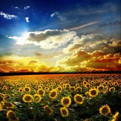 sunflower © Vitaly Krivosheev #30466128   Sonnenblume ist Sommerzeit:   Die Sonnenblume spricht:  Schau, ich verschenke mein Herz  an alle hungrigen Vögel.  Verschenke du deine Liebe  an alle hungrigen Menschen.  © Annegret Kronenberg  http://zeit-fuer-mussestunden.frei-raum-zeit.de/?p=2160