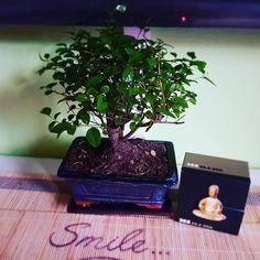 Cer si pământ #bonsai #bonsaitree #zen