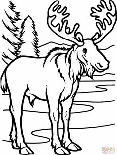 forestanimalscoloringpages Moose Free Animal Coloring Pages