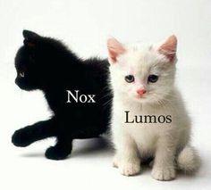 #harrypotter #lumus #nox #gatitos