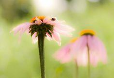 Garden, Flower, Meadow, Summer, Nature, Grass #garden, #flower, #meadow, #summer, #nature, #grass